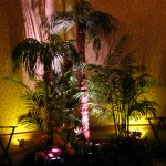 Greenscape Design BNI Tropical Palm Trees