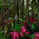 Greenscape Design Black Bamboo green decor options