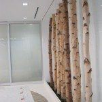 Greenscape Design Silver Birch Pole Office Lobby Decor