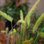 Greenscape Design grass green decor options