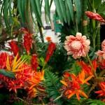 Greenscape Design tropical flowers green decor options