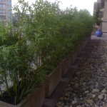 Greenscape Design Exterior Bamboo Planters Private Residence