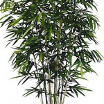 Greenscape Design New Golden Bamboo Natural Trunk Rental Inventory