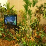 Greenscape Design African Rainforest