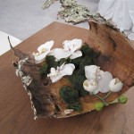 Greenscape Design Natural Birch Bark Moss and White Orchid Centrepiece