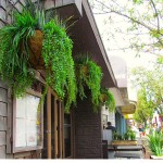 Greenscape Design Burgoo Artificial Exterior Hanging Baskets