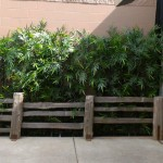 Greenscape Design Burgoo Main Street Bamboo Wall