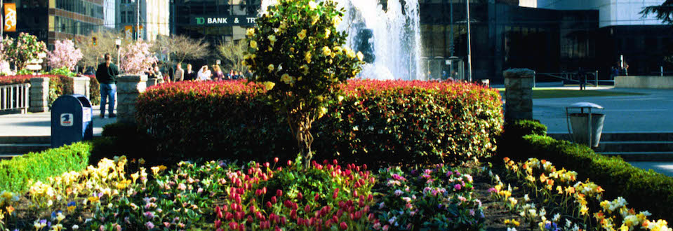 Greenscape Design Tulip Garden