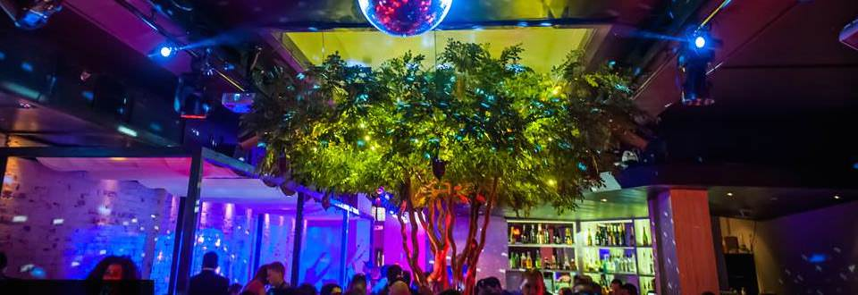 Greenscape Design Feature Acacia Tree Vancouver Cabana Nightclub copy