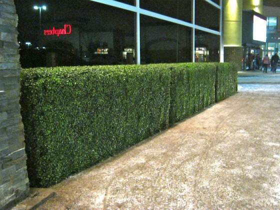 Faux Boxwood Hedges Greenscape