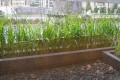 Snake Grass and Black Grass Exterior Divide Wall