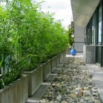 Greenscape-Design-Green-Bamboo-and-Fountain-Grass-in-Concrete-Planters-2-315x420