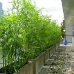 Greenscape Design Green Bamboo and Fountain Grass in Concrete Planters