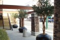 Greenscape Design Joeys Restaurant Olive Trees