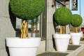 Greenscape Design Joeys Restaurant Exterior Treated Boxwood Balls in Illuminated Planters