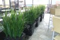 Greenscape Design Joeys Restaurant Grass Planters