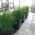 Greenscape-Design-Joeys-Restaurant-Fountain-Grass-Planters-560x420