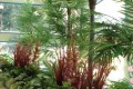 Greenscape Design Karen Magnussen Pool Tropical Palm Trees