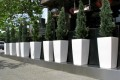 Greenscape Design Moxies West Broadway Cedar Topiaries in White Gloss Planters