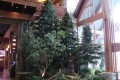 Greenscape Design River Rock Casino Westcoast Exterior Entrance Pine Trees