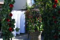 Greenscape Design Wedding Decor Garden View