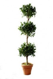 Bayleaf Triple Ball Topiary