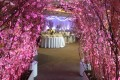 Greenscape Design Cherry Blossom Wedding Entrance Archway
