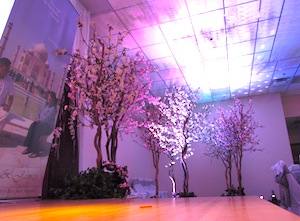 Greenscape-Design-Cherry-Blossoms-Wedding-Stage-Decor