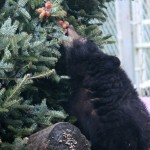 Greenscape Design Critter Care Tree Recycling Bear