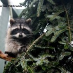 Greenscape Design Critter Care Tree Racoon