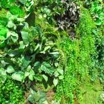 Greenscape Design Green Wall Vertical Garden