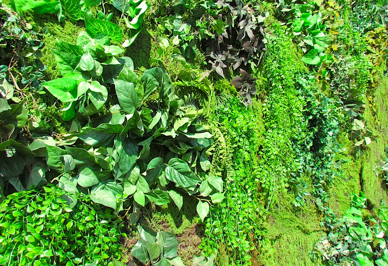 Greenscape Design Green Wall Vertical Garden