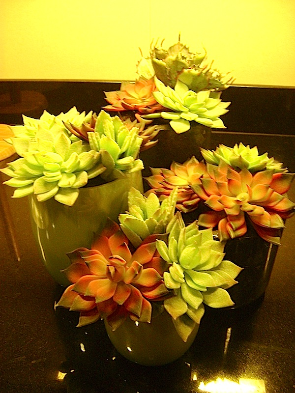 Greenscape Design Home Decor Succulent Centrepieces