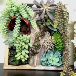 Greenscape Design Succulent Shadow Box