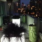 Greenscape Design Light Up Planters Vancouver