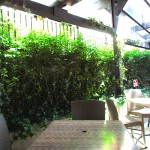 Greenscape Design Patio Landscaping Ivy Wall Hedging