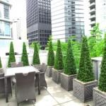 Greenscape Design Rustic Boxwood Topiaries Privacy Screen