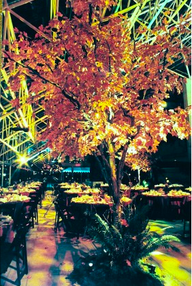 Greenscape Design Fall Tree Vancouver Law Courts Decor Rentals