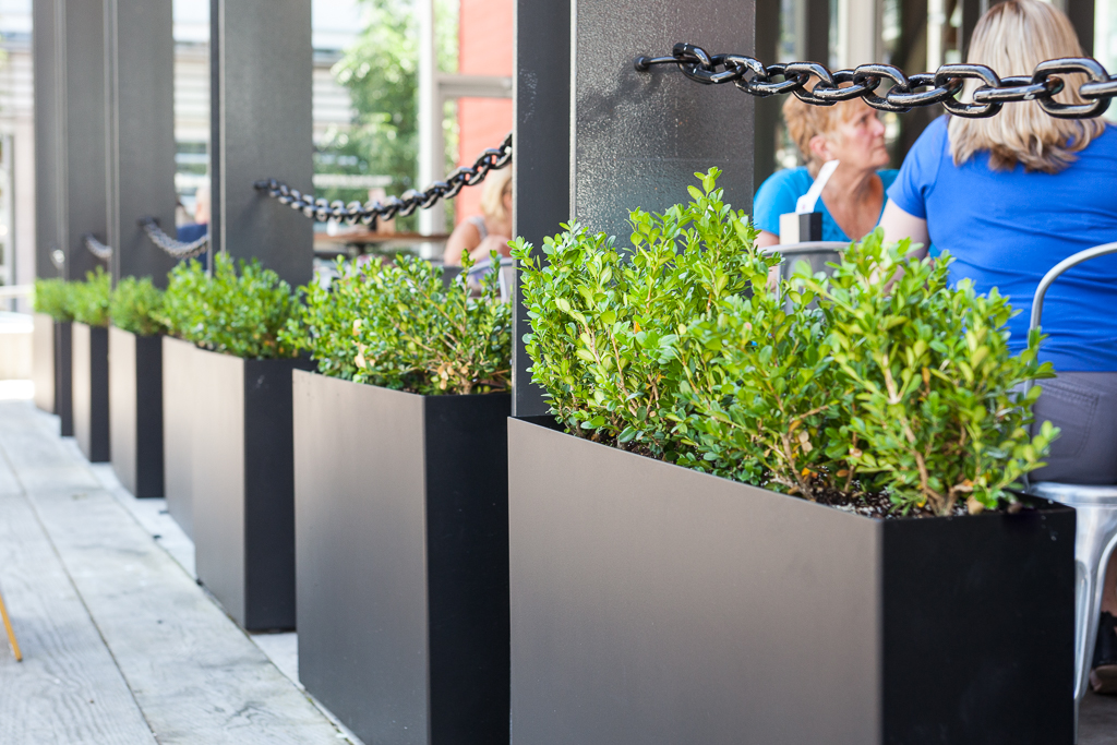 Greenscape Design Black Steel Rectangular Planters and Boxwood