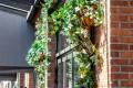 Greenscape Design Climbing Green Ivy Walls