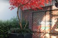 Greenscape Design Custom Artificial Outdoor Red Japanese Maple Tree