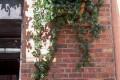 Greenscape Design Custom Ivy Planters