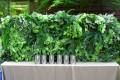 Greenscape Design Artificial Green Wall Decor Rentals