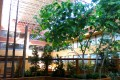 Greenscape Design Artificial Trees for Hospitality and Commercial Spaces
