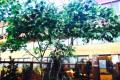 Greenscape Design Custom Artificial Maple Tree Alberta