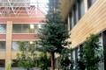 Greenscape Design Custom Black Spruce Tree Sawridge Hotel Jasper