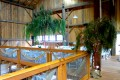 Greenscape Design Harris Barn Delta Willow Tree Event Decor Rentals