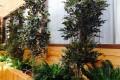 Greenscape Design Interior Landscape Design Canada