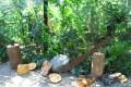 Greenscape Design Live Evergreen Tree Decor Rentals Vancouver