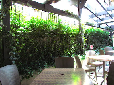 Greenscape-Design-Patio-Landscaping-Ivy-Wall-Hedging